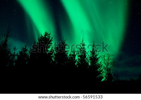 Northern Lights above a forest, Norway - stock photo
