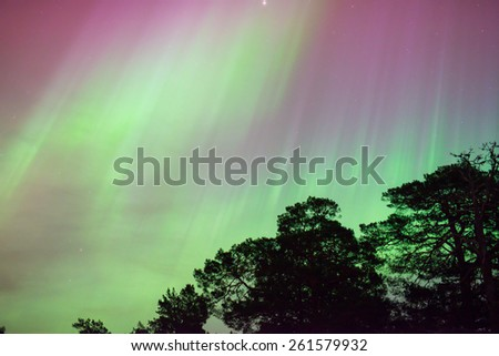 Northern lights (Aurora borealis) over trees - stock photo