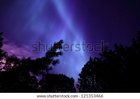 Northern Lights seen through an Icelandic Forest - stock photo