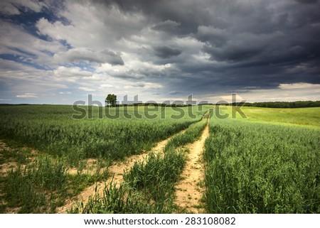 Northern Poland./ Field. - stock photo