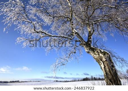 Northern Poland / Winter Tree  - stock photo