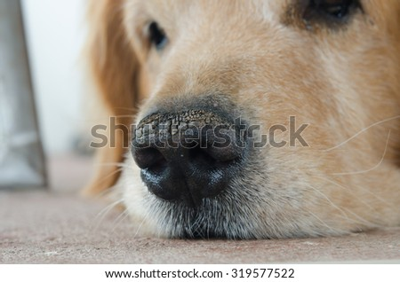 nose dog  closeup