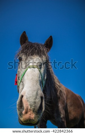 Nose horse close up against the blue sky - stock photo