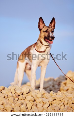 Not purebred domestic dog on filling brick against the blue sky. - stock photo