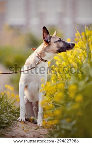 Not purebred domestic dog smells yellow flowers. - stock photo