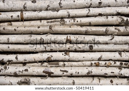 Not sawn birch logs. For the kindling fire. Close-up. - stock photo