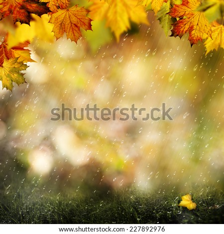November rain. Beauty autumnal backgrounds with falling leaves for your design - stock photo