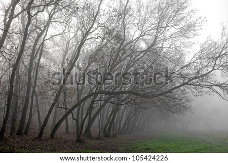 November scenery in the forest with morning fog