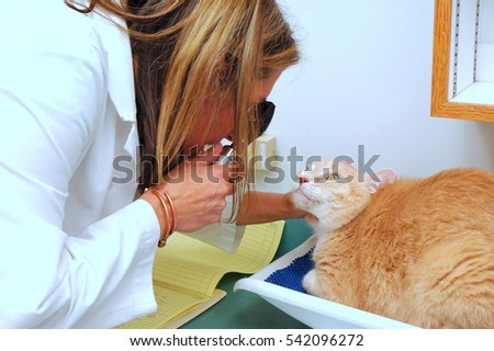 NOVEMBER 23, 2007. SEATTLE, WA. CIRCA: Female veterinarian giving an eye exam to a cat in her clinic.