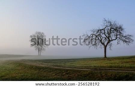 November trees - stock photo