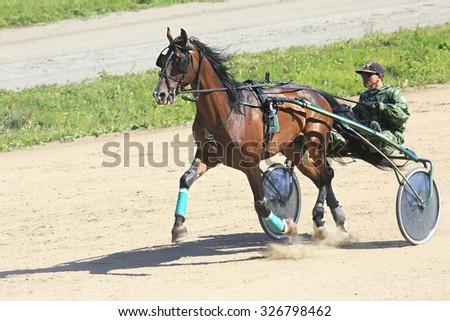 Novotyryshkino, Russia - August 01, 2015: Trotting Races at the Hippodrome Sibirskoe podvorie - stock photo