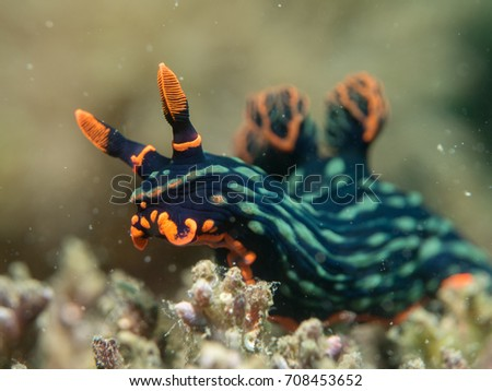 Nudibranch on the coral, Philippines