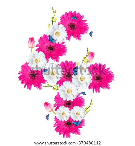 Number 4, flower isolated on white background. Gerber, tulips and butterfly  - stock photo