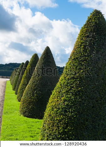 Number of topiary trees in beautiful landscape of ornamental garden - stock photo