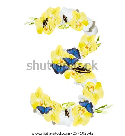 Number 3 orchid and butterfly,  spring isolated on white background - stock photo