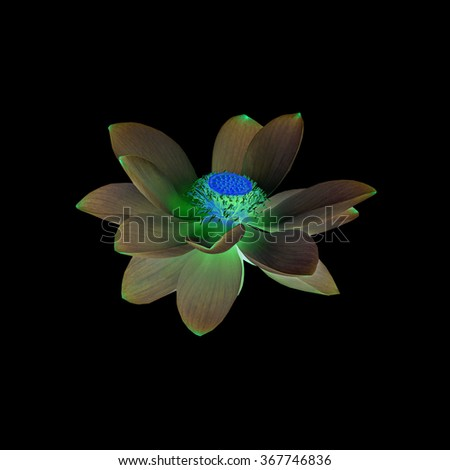 Nuphar flower in negative, invert mode, water-lily, pond-lily, spatterdock, Nelumbo nucifera, also known as Indian lotus, sacred lotus, bean of India, lotus, close up. - stock photo