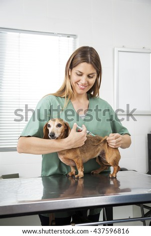 Nurse Giving Injection To Dachshund - stock photo