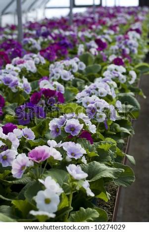 nursery-garden - stock photo