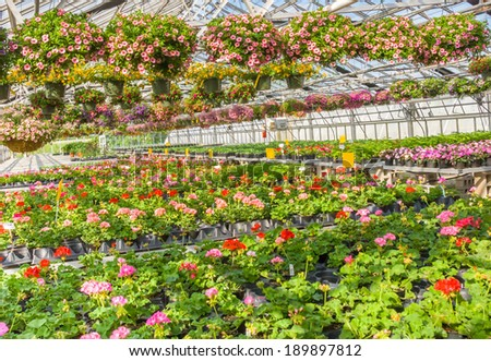 nursery of flowers and plants for garden in greenhouse - stock photo