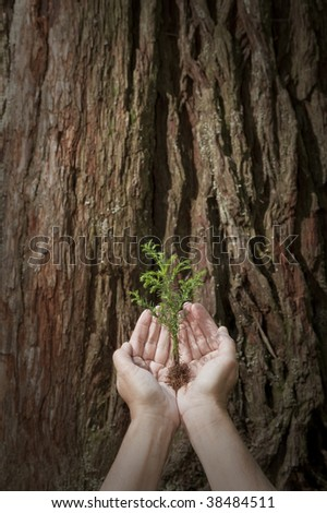 Nurture baby tree seedling against giant redwood background concept