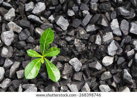 nurturing a young green plant growing on crushed gravel - stock photo