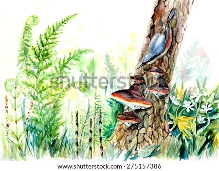 Nuthatch on the tree. Decoration with wildlife scene. Blossom anemone in forest. Watercolor hand drawing illustration.  - stock photo