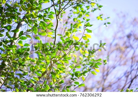https://thumb9.shutterstock.com/display_pic_with_logo/167494286/762306292/stock-photo-nuts-in-a-garden-762306292.jpg