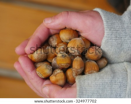nuts in children's hands outdoors - stock photo
