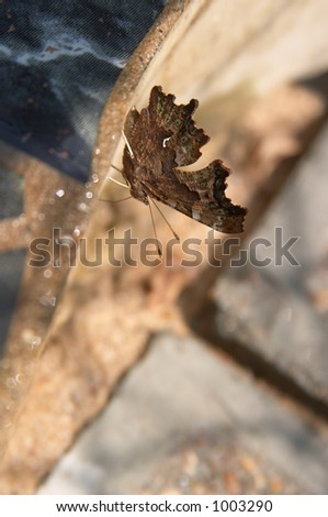 Nymphalis butterfly on the wall - stock photo