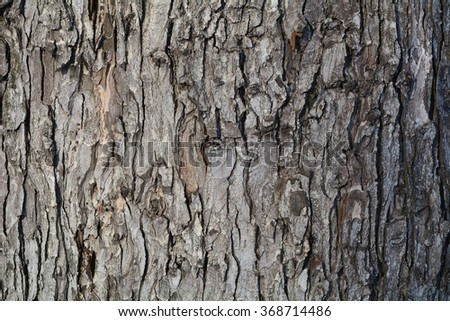 Oak bark. You can use almost any integers. You can create texture. Use the site as a background or your desktop./Gray Oak Bark - stock photo