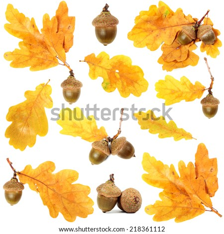 Oak branches with leaves and acorns on wooden background - stock photo