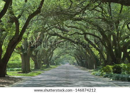 Oak canopied South Boundary Street in Aiken, South Carolina.