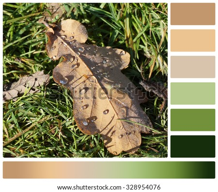 Oak Leaf On Grass. Palette With Complimentary Colour Swatches. - stock photo