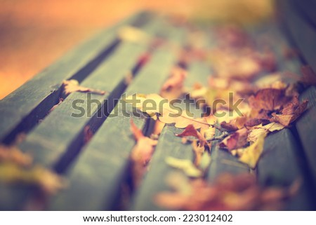 Oak leafs on the bench during autumn season, close up photo with shallow depth of field. - stock photo