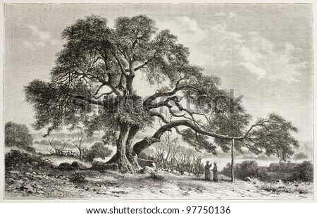 Oak of Mamre old view, near Hebron, Palestine. Created by De Bar, published on Magasin Pittoresque, Paris, 1882 - stock photo