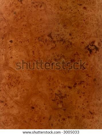 oak root veneer - stock photo