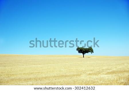 Oak tree, Alentejo , Portugal - stock photo