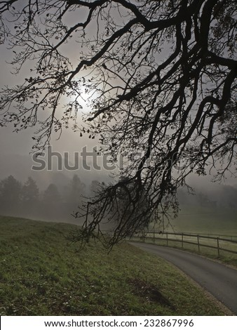 Oak tree branches in the backlight - stock photo