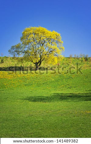 Oak tree in a meadow - stock photo