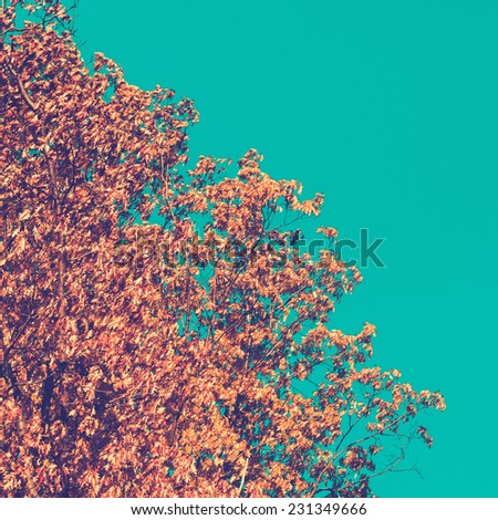 Oak tree on clear blue sky, retro toned - stock photo