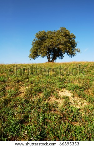 Oak tree with green field and blue sky - stock photo