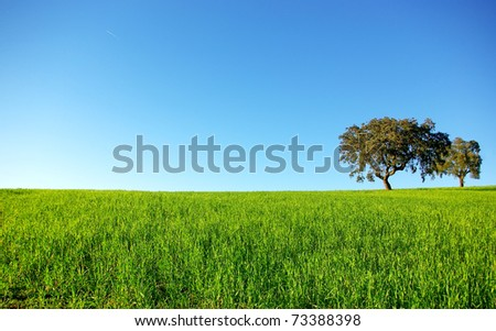 Oak trees in a wheat field at Portugal.