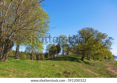 Oak trees in spring landscape - stock photo