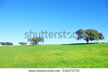 oak trees in wheat field at Portugal - stock photo