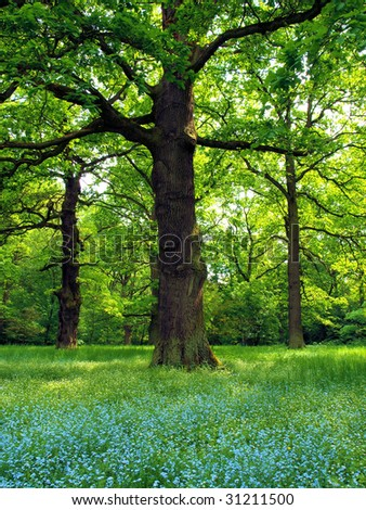 Oak trees with veronica flower - stock photo