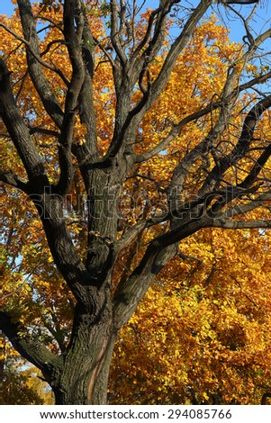 oak trunk and yellow leaves at autumn - stock photo