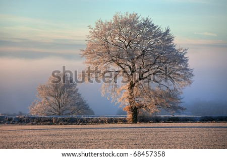 Oak with hoar frost, Gloucestershire, England. - stock photo