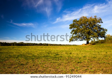 Oak with the turned yellow foliage. Autumn - stock photo