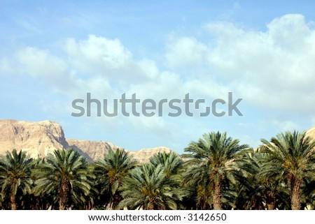 oasis #4 - stock photo
