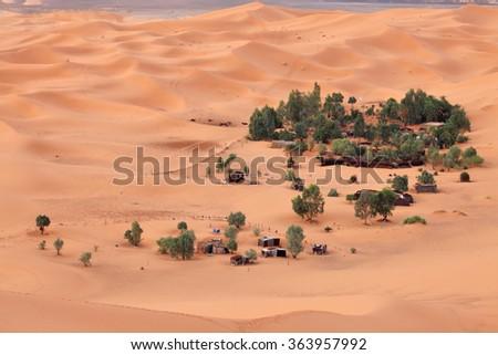 Oasis in Sahara desert  - stock photo